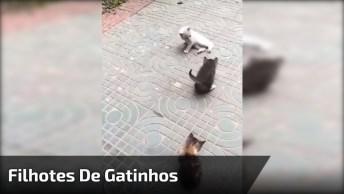 Filhotes De Gatinhos, Olha Só Que Criaturinhas Mais Fofas!