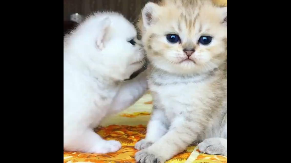 Filhotes de gatinhos