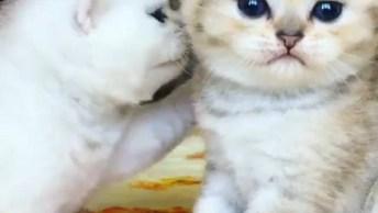 Filhotes De Gatinhos, Os Animais Mais Fofinhos Que Você Verá Hoje!