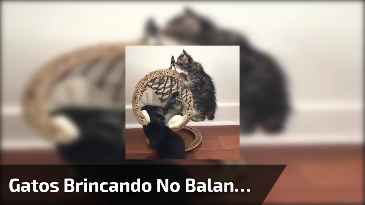 Gatos brincando no balanço