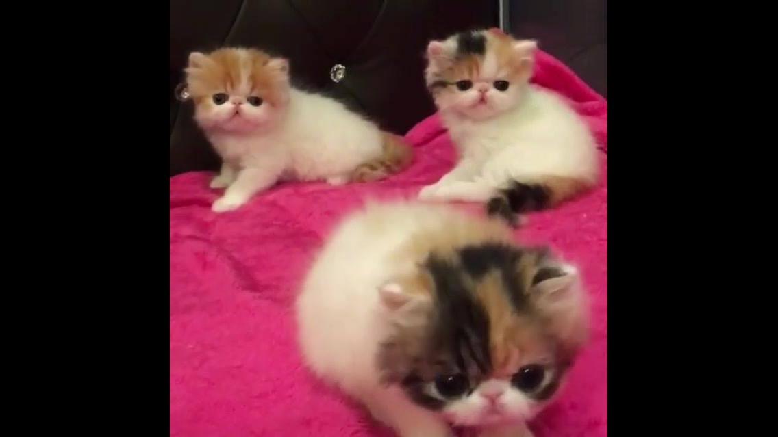 Filhotes de gatos com carinha manchadinhas