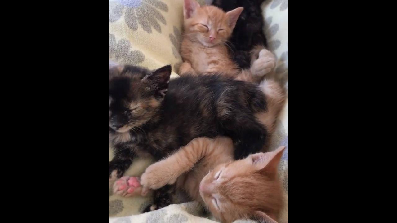 Filhotes de gatos dormindo amontoados
