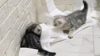Filhotes De Gatos Fazendo A Festa Com Papel Higiênico Do Banheiro!