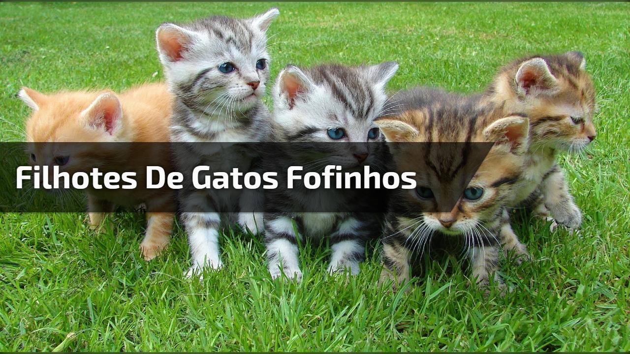 Filhotes de gatos fofinhos
