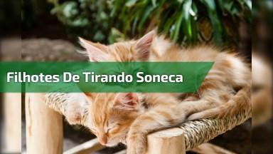 Filhotes De Gatos Tirando Uma Soneca, Que Coisinhas Mais Lindinhas!
