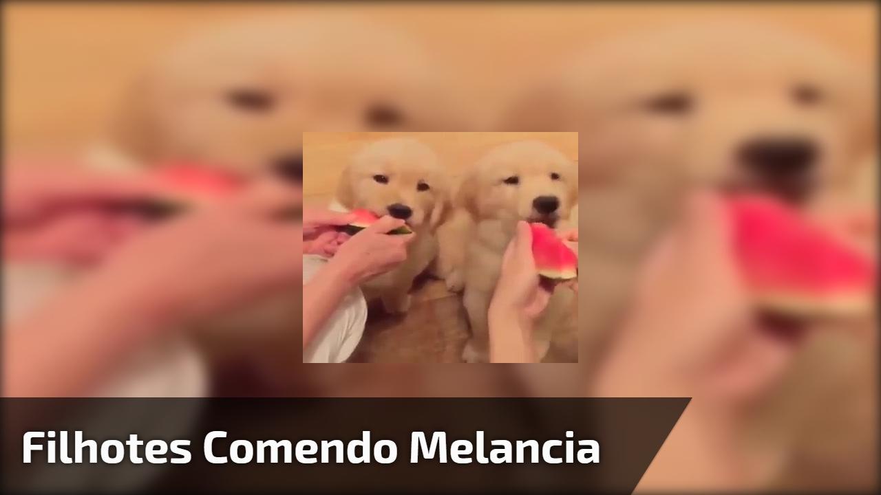 Filhotes comendo melancia