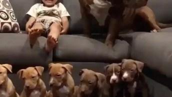 Filhotes De Pit Bulls, É Muita Fofura Em Um Único Vídeo, Confira!