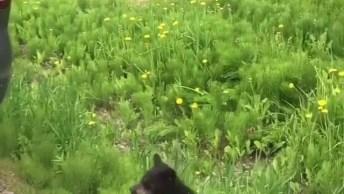 Filhotes De Urso-Negro Com Sua Mamãe, Veja Que Coisa Mais Linda!