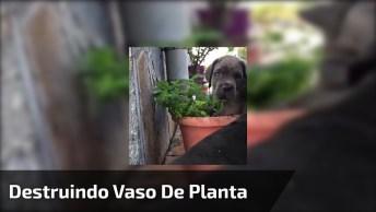 Filhotes Destruindo Vaso De Planta, Olha Só Como São Arteiros!