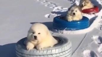 Filhotes Passeando Na Neve Dentro De Pneus, Olha A Carinha Deles!
