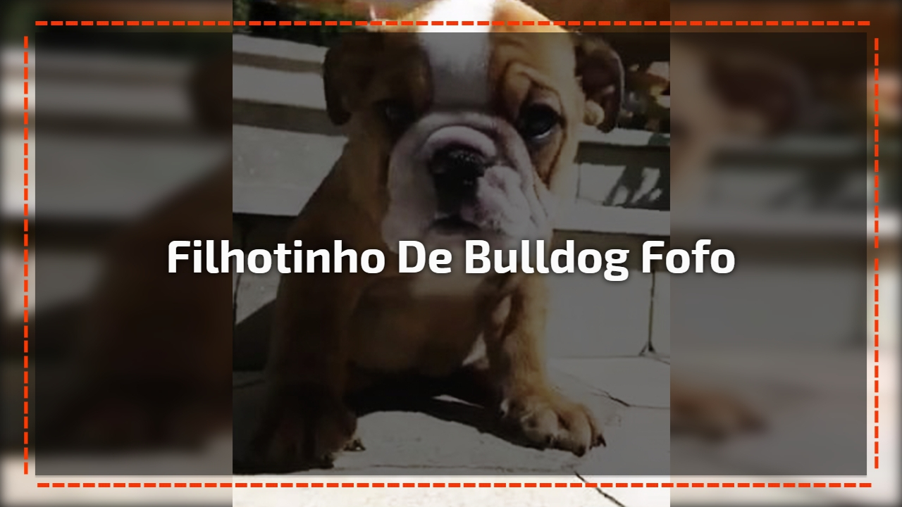 Filhotinho de Bulldog fofo