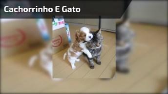 Filhotinho De Cachorrinho Mordendo Orelha De Gato, Que Dupla Mais Linda!