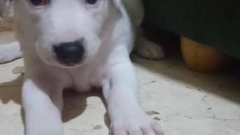 Filhotinho De Cachorro Bocejando, Olha Só Que Criaturinha Mais Fofa!