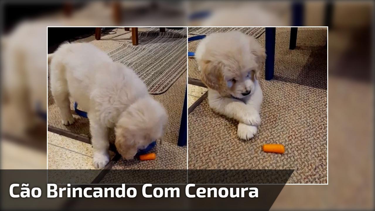 Cão brincando com cenoura