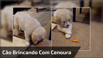 Filhotinho De Cachorro Brincando Com Pedaço De Cenoura, Que Fofo!