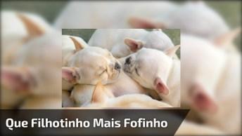 Filhotinho De Cachorro Chorando, Enquanto Seu Irmãozinho Dorme, Que Fofuras!