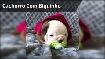 Filhotinho De Cachorro Chupando Biquinho, Que Coisinha Mais Fofa!