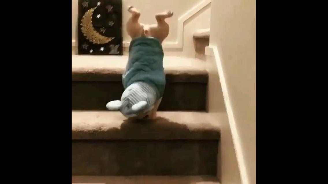 Filhotinho de cachorro descendo escada, olha só que fofura!!!