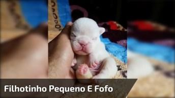 Filhotinho De Cachorro Dormindo, Olha Só Que Tamaninho De Cachorrinho!