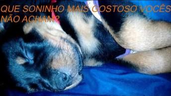 Filhotinho De Cachorro Dormindo, Que Soninho Mais Fofinho!