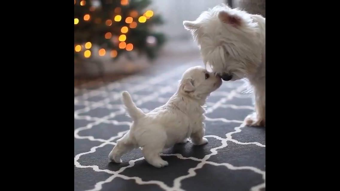 Filhotinho de cachorro explorando a casa com a mamãe