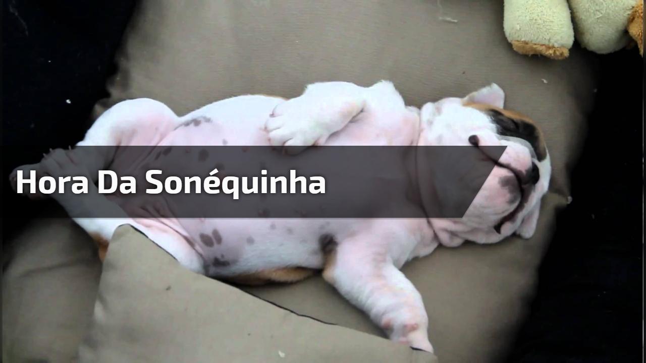 Filhotinho de cachorro ganhando carinho na barriga, que cena mais fofa!