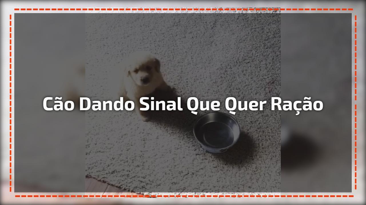 Filhotinho de cachorro leva vasilha de comida para dona, hahaha!!!