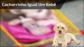 Filhotinho De Cachorro Mamando Na Mamadeira, Que Fofura!