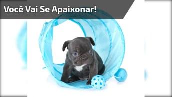 Filhotinho De Cachorro Super Fofinho, Você Vai Se Apaixonar!