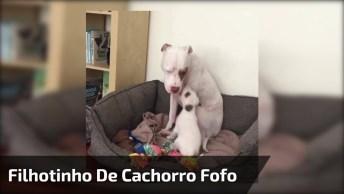 Filhotinho De Cachorro Super Fofo Fazendo Charminho Para Dormir Com A Mamãe!