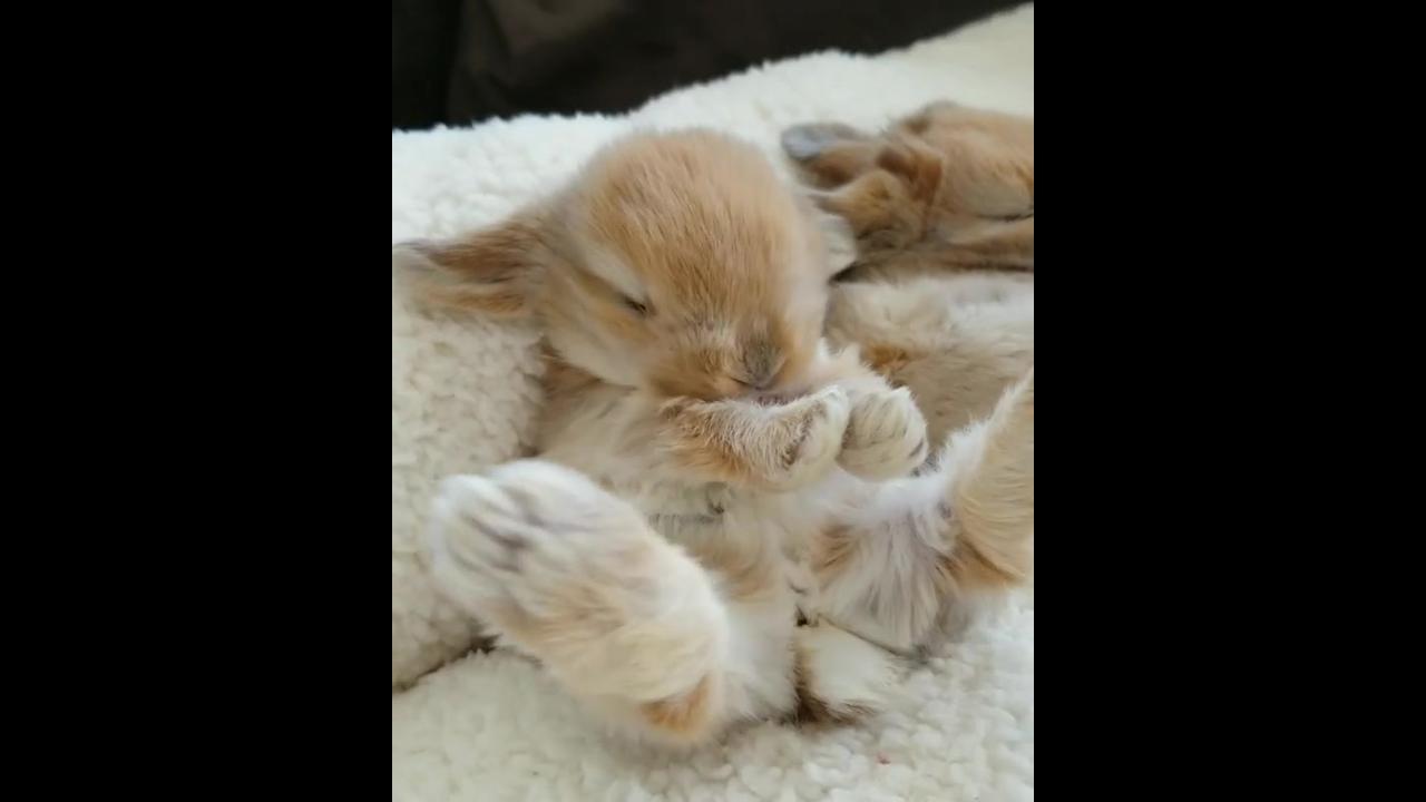 Filhotinho de coelhinho, olha só que coisinha mais fofinha!!!