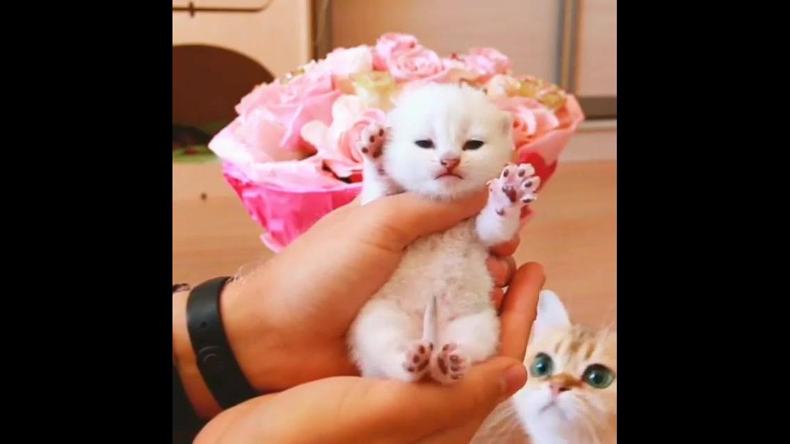 Filhotinho de gatinha branquinho, olha só o tamaninho dele!!!