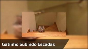 Filhotinho De Gatinho Aprendendo A Subir Escadas, Olha Só Esta Carinha Linda!