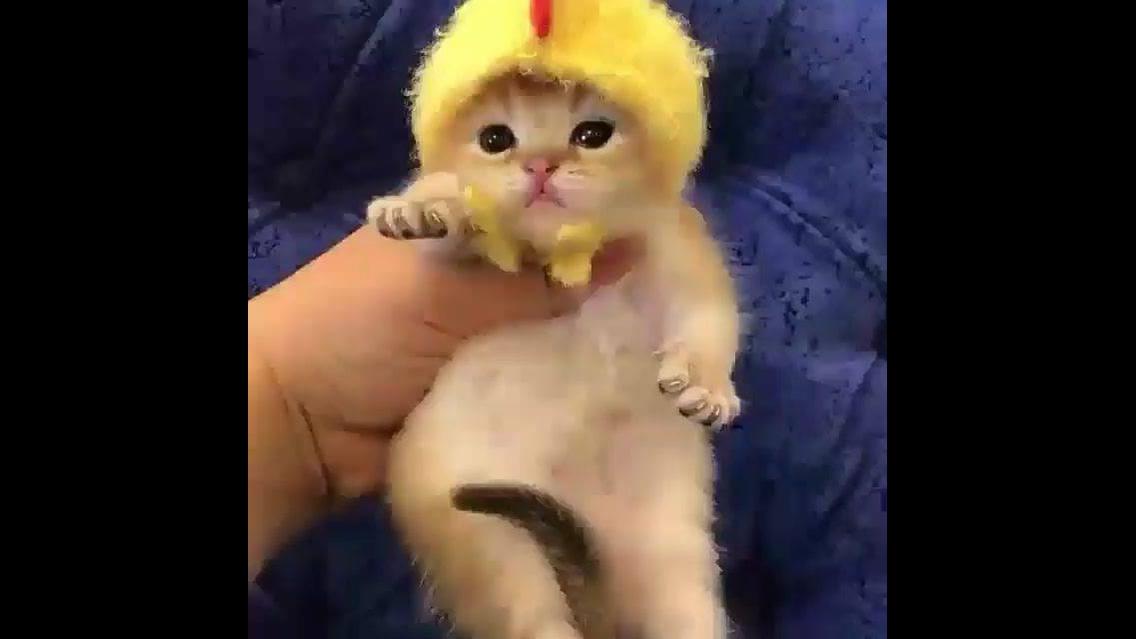 Filhotinho de gatinho com toquinha amarela