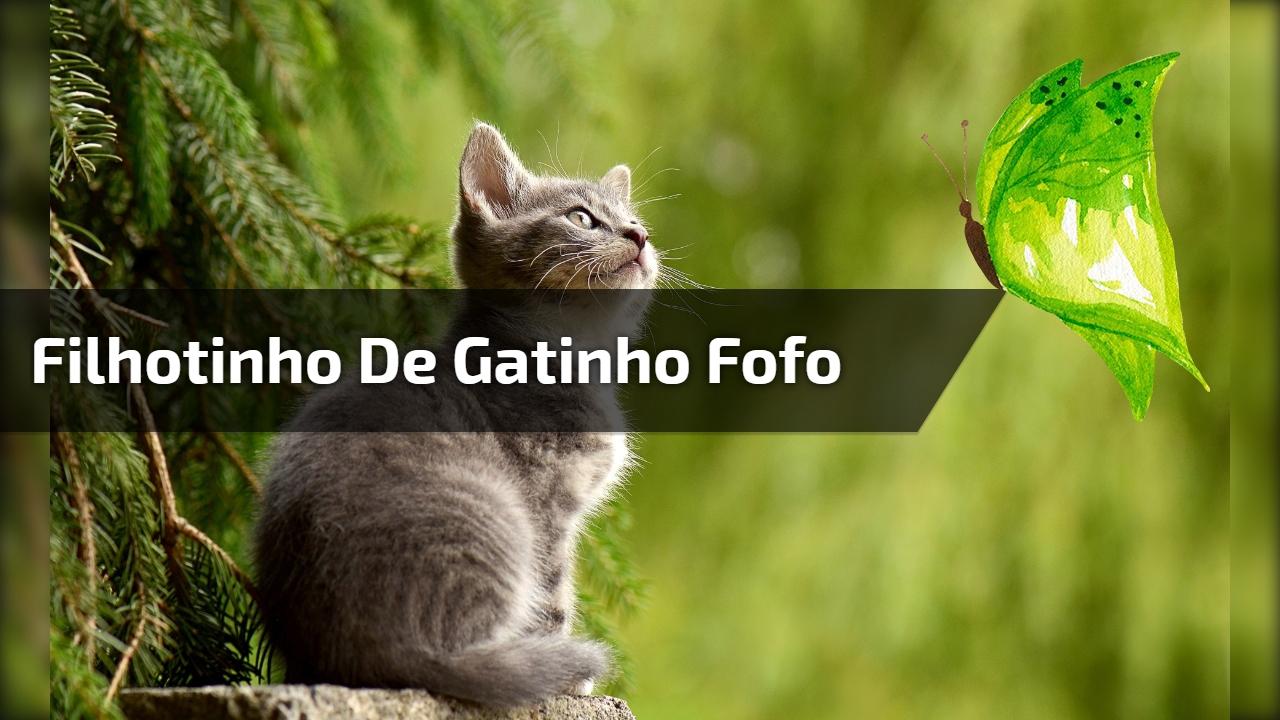 Filhotinho de gatinho fofo