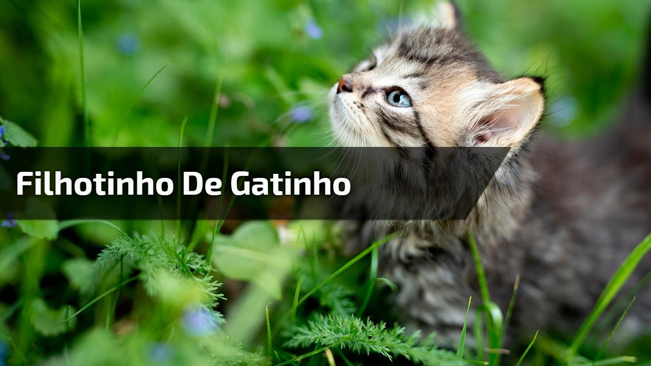 Filhotinho de gatinho