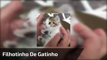 Filhotinho De Gatinho Miando, O Barulhinho Mais Bonitinho Que Você Vai Ouvir!