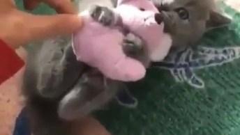 Filhotinho De Gato Agarrado Com Ursinho De Pelúcia, Não Mexa Com Seu Brinquedo!