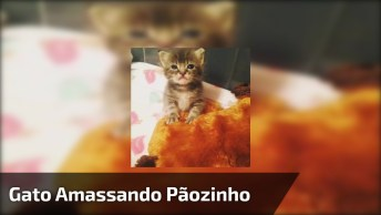 Filhotinho De Gato Amassando Pãozinho, Olha Só Que Coisinha Mais Fofa!