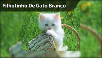 Filhotinho De Gato Branco Mamando Sua Mamadeira, Que Coisa Mais Fofa!
