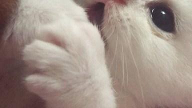 Filhotinho De Gato Branquinho, Lambendo As Patinhas, Que Fofinho!