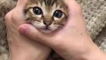 Filhotinho De Gato Brincando Com As Mãos De Seu Dono, Veja Que Fofura!