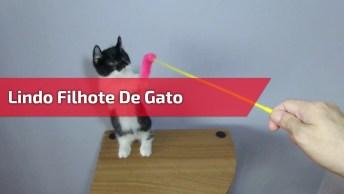 Filhotinho De Gato Brincando Com Vareta, Ele É Muito Lindo E Fofo!