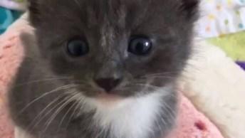 Filhotinho De Gato Cinza Escuro, Veja Que Coisinha Mais Lindinha!
