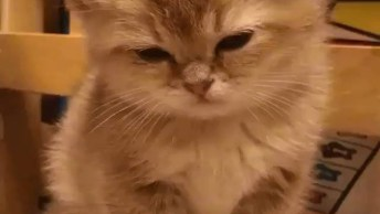 Filhotinho De Gato Com Sono, Olha Só Ele Cochilando Em Pé!
