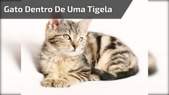 Filhotinho De Gato Dentro De Uma Tigela, Olha Só Este Narizinho Rosinha!