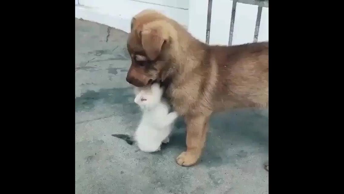 Filhotinho de gato e cachorro se conhecendo