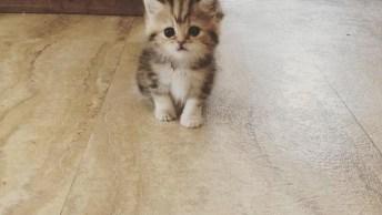 Filhotinho De Gato, Ele É Tão Bonitinho Que Parece De Brinquedo!