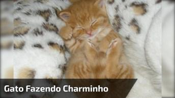 Filhotinho De Gato Fazendo Charminho, Olha Só Que Coisinha Mais Fofinha!