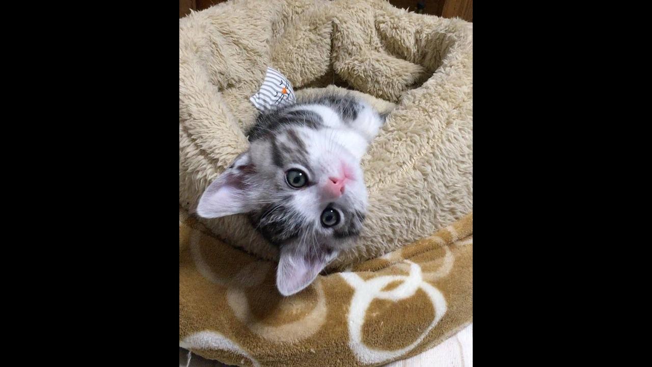 Filhotinho de gato fazendo gracinha para câmera